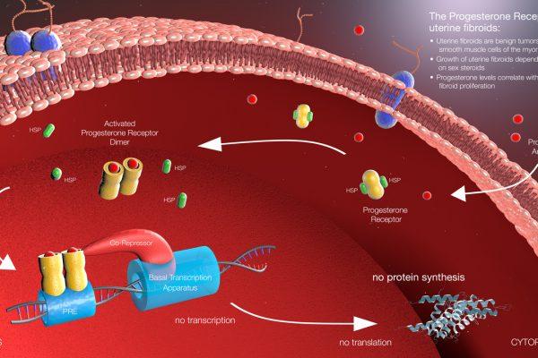 Intracellular Progesterone Receptors