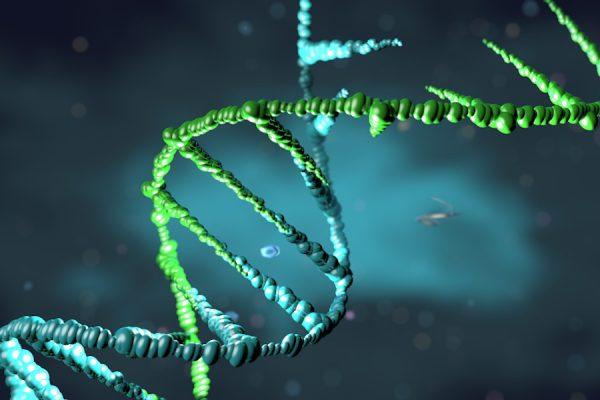 DNA destruction
