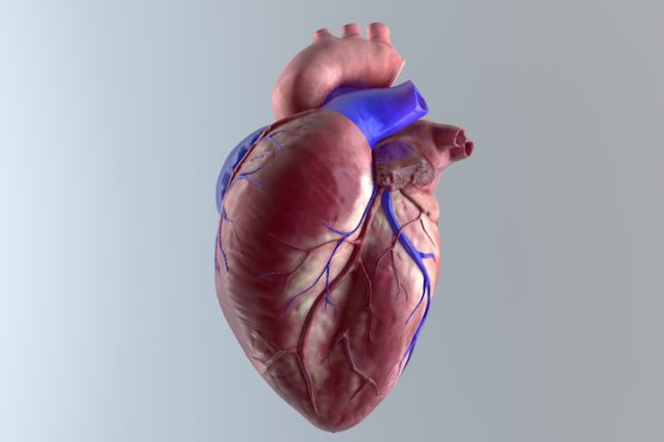 Heart animation 3D